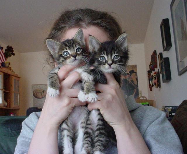 Домашние животные помогают снять стресс
