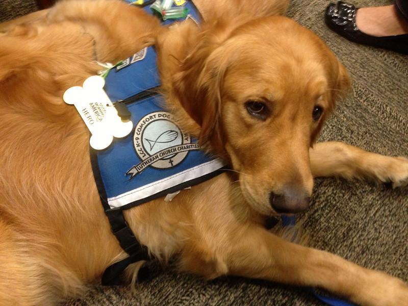 Спасательная собака в Оклахоме