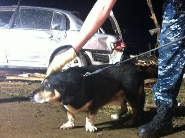Спасенная собака в Оклахоме