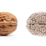 грецкий орех - мозг