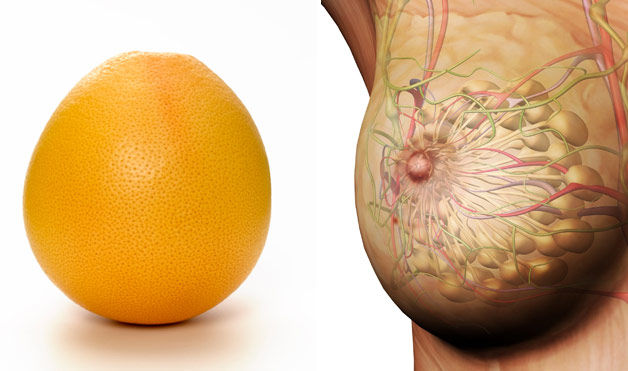 грейпфрут - грудь