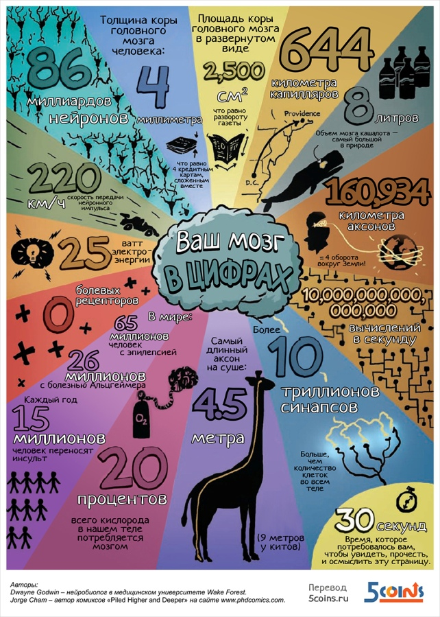 Мозг в цифрах