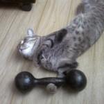 Коты занимаются спортом