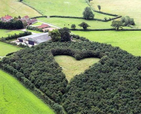 Сердце из деревьев