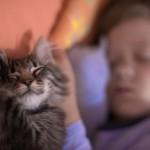 мальчик спит с котенком