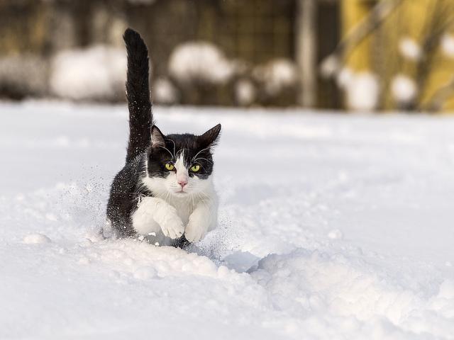 кот бежит зимой